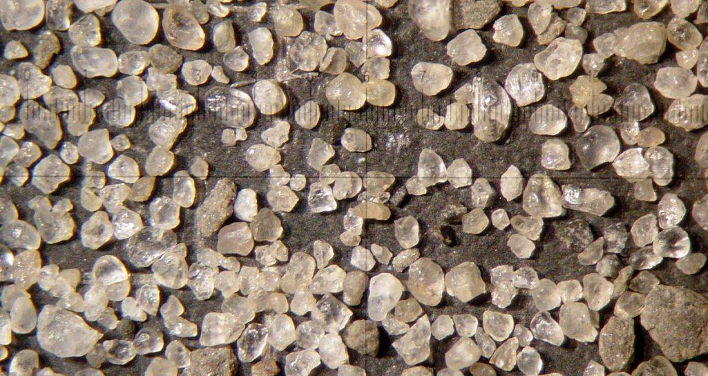 Paleo Data Inc. - Under the Microscope